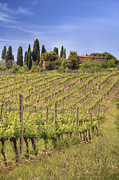 Italian Wine Photo Framed Prints - Montalcino Framed Print by Joana Kruse
