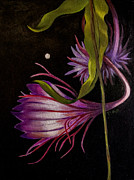 Fanatasy Prints - Moonflower 2 Print by Dian Paura-Chellis