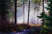 Lanscape Prints - Morning Mist Print by Donna Duckworth