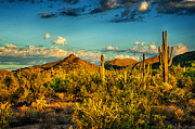 Sonoran Desert Prints - Morning Serenity  Print by Saija  Lehtonen