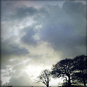 Gloomy Trees Posters - Morning sky Poster by Les Cunliffe
