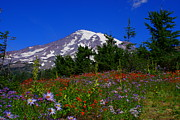 Jerry Cahill - Mount Rainier