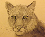 Michelle Wolff - Mountain Lion