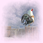 Rooster Art - Mr Rooster by Jeff Burgess