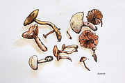 Muted Drawings Prints - Mushrooms Print by Hillary Floyd