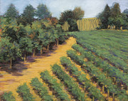 California Vineyard Paintings - Napa Afternoon by Dena Cornett
