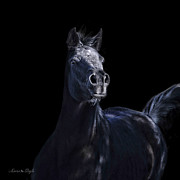 Forelock Photo Posters - Noir Poster by Karen Slagle