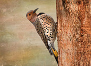 Woodpecker Mixed Media - Northern Flicker by Susan Schwarting