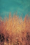 Dune Grass Posters - Northsea Feeling Poster by Angela Doelling AD DESIGN Photo and PhotoArt