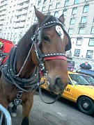 President Mixed Media - NYC Horse by Jose Ramos