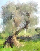Old Olive Tree Print by Dragica  Micki Fortuna