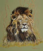Game Pastels Prints - Old Warrior African Lion Print by Mary Dove