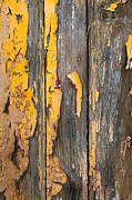 Crisp Art - Old Wooden Background by Carlos Caetano