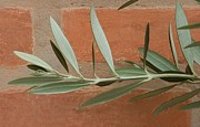 Olive Leaves Print by Maria Bedacht
