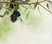 Mythja  Photography - Olives design background