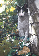 Cat Portraits Pastels Prints - On the Prowl Print by Karie-ann Cooper