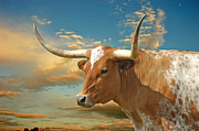 Texas Longhorns Photos - One Big Dude by Robert Anschutz