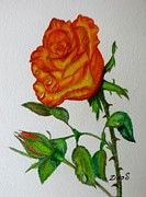 Blooming Drawings Originals - Orange Rose by Zulfiya Stromberg