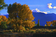 Owens River Metal Prints - Owens Valley Fall Colors  Metal Print by Paul W Faust -  Impressions of Light