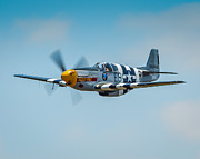P51 Photo Posters - P-51 Mustang Poster by Puget  Exposure