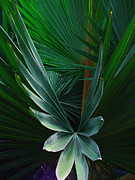 Abstract Palm Trees Photos - Palm frond by Susanne Van Hulst