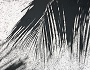 Jim Rossol - Palm Shadow