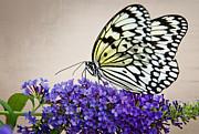 Saija  Lehtonen - Paper Kite Butterfly