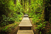 Trail Posters - Path in temperate rainforest Poster by Elena Elisseeva