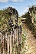 Dunes Metal Prints - Path Through Dunes Metal Print by Colin and Linda McKie