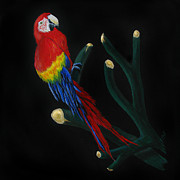 Macaw Art Paintings - Perched Macaw by Peter Piatt