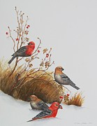 Gina Gahagan Metal Prints - Pine Grosbeaks Metal Print by Gina Gahagan