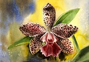 Cattleya Framed Prints - Pink Cattleya Orchid Framed Print by Alfred Ng