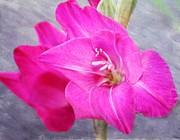 Pink Gladiola Print by Cathie Tyler
