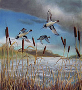 Ducks Pastels - Pintails and Cat Tails by Marcus Moller