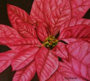 Marna Edwards Flavell - Poinsettia