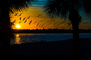 Port Charlotte Beach Sunset In January Print by Anne Kitzman