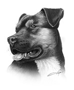 Pencil Art Drawings Posters - Portrait of a Dog Poster by Dale Jackson