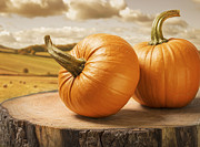 Bales Photo Metal Prints - Pumpkins Metal Print by Christopher and Amanda Elwell