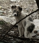 Puppy Photo Originals - Puppy by Arman Mkrtchyan