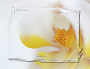 Orchids Digital Art - Pure White by Sebastian Musial