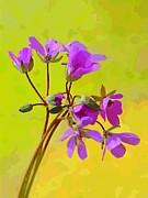 John Tidball  - Purple Wildflowers