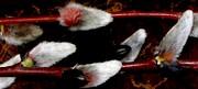 Gail Matthews - Pussy Willow Texture like Fur