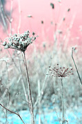 Pink Flower Prints Prints - Queen Annes Lace Print by Bonnie Bruno