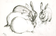 Pet Drawing Drawings Posters - Rabbits Poster by Jeanne Maze