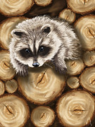 Wood Digital Art Framed Prints - Raccoon Framed Print by Veronica Minozzi