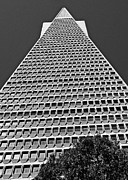 Office Buiding Prints - Reaching to the Sky Print by Dan Shehan Photography