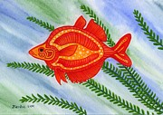 Lori Ziemba Framed Prints - Red Rainbow Fish Framed Print by Lori Ziemba