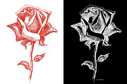 Gordon Punt Prints - 2 Red Rose Drawing Combo Print by Gordon Punt