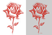 Warhol Drawings Posters - 2 Red Roses Poster Poster by Gordon Punt
