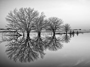 Flood Framed Prints - Reflection Framed Print by Tom Druin
